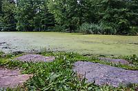 Nova York (EUA), 04/08/2019 - Clima / Central Park - Vista do lago The Pool no Central Park na cidade de Nova York nos Estados Unidos neste domingo, 04, é visto com grande quantidade de folhas. (Foto: William Volcov/Brazil Photo Press)