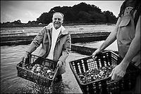 Europe/France/Bretagne/56/Morbihan/Plouhinec: Jean-Paul Abadie, restaurant: L'Amphytrion  à Lorient, chez Nicolas Bruno , Ostréiculteur sur le Ria d'Etel [Non destiné à un usage publicitaire - Not intended for an advertising use]
