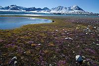 Kungsfjord<br /> Svalbard<br /> Norway