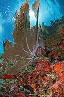 Seafan scenic<br />