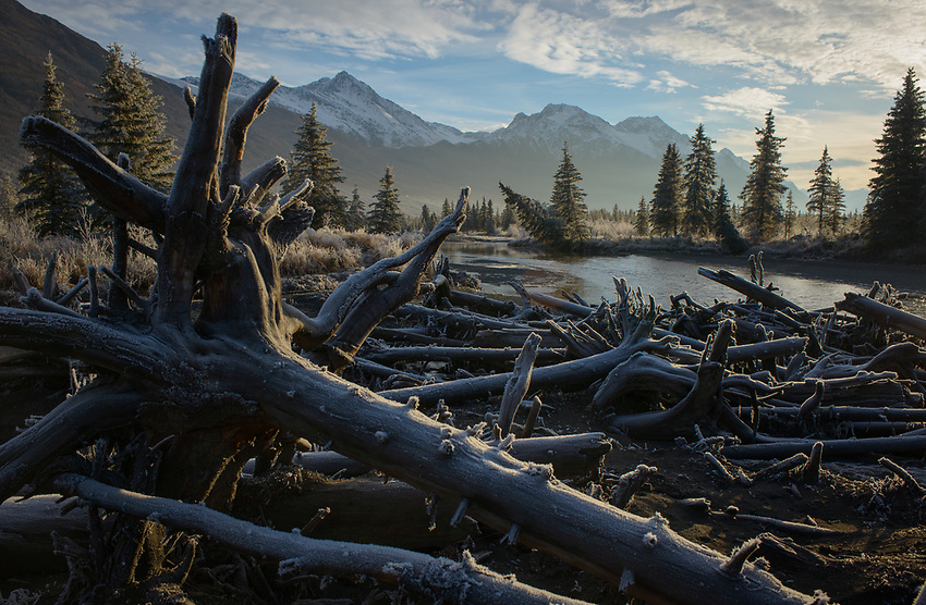 November frost in Eagle River, Alaska. Photo by James R. Evans.
