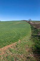 Winter wheat - Rutland, April
