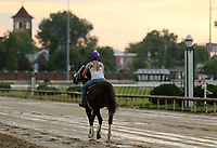 LOUISVILLE, KY -MAY 27: Preakness runner up Bravazo, with exercise rider Danielle Rosier, jogged two miles at Churchill Downs, Louisville, Kentucky during a special training time for Belmont Stakes contenders. The track was muddy from an overnight rain. (Photo by Mary M. Meek/Eclipse Sportswire/Getty Images)