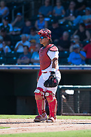 Surprise Saguaros catcher Jeremy Martinez (4), of the St. Louis Cardinals organization, during an Arizona Fall League game against the Salt River Rafters on October 9, 2018 at Surprise Stadium in Surprise, Arizona. Salt River defeated Surprise 10-8. (Zachary Lucy/Four Seam Images)