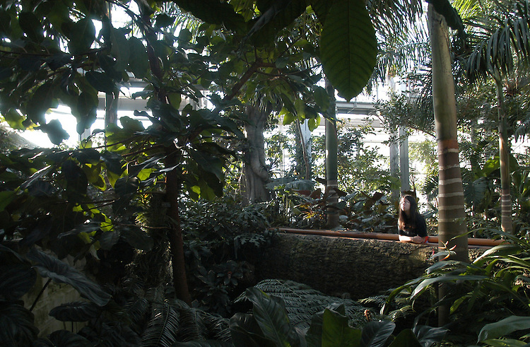garden2/022003 - Amanda Devine, 13, visiting from Potomac, Md., in the jungle room at the Botanic Garden.