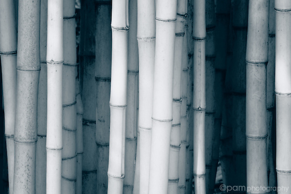 Black and white of bamboo grove taken in infrared.
