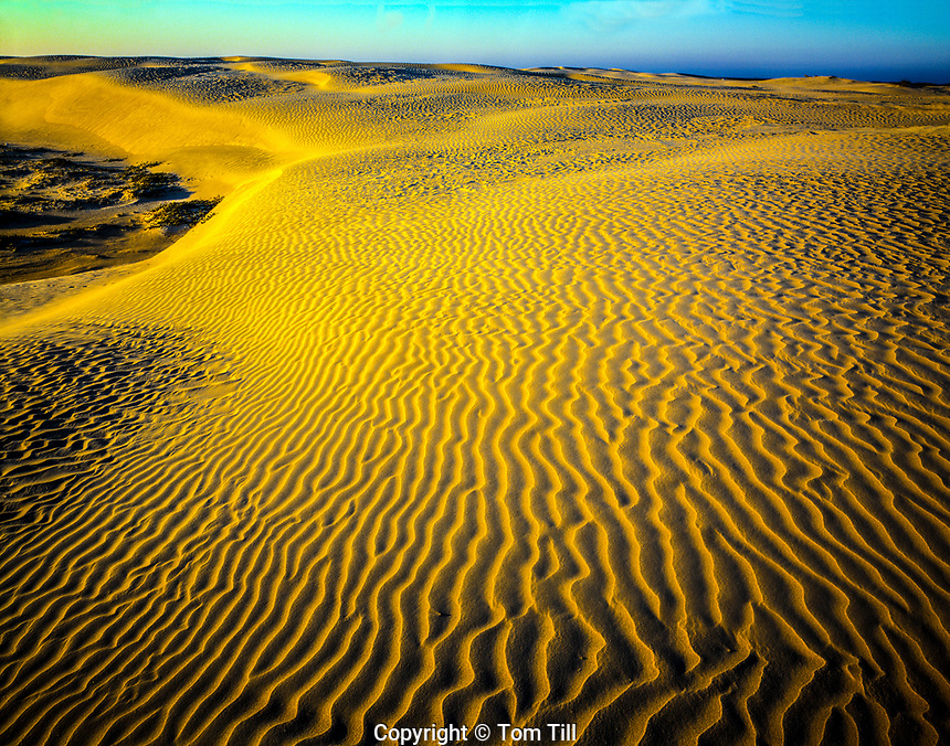 Dunes at Sunset  Padre Island National Seashore, Texas  Gulf of Mexico  March