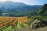 Vineyards in fall, Jack London State Hitoric Park, near Glen Ellen, Sonoma County, California