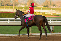 ARCADIA, CA  JANUARY 07: #8 Midnight Bisou, ridden by Mike Smith, return to the connections after winning  the Santa Ynez Stakes (Grade ll) on January 7, 2018, at Santa Anita Park in Arcadia, CA. (Photo by Casey Phillips/ Eclipse Sportswire/ Getty Images)