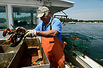 Off the coast of Vinalhaven, Maine lobsterman Ronnie Walker inspects his catch.