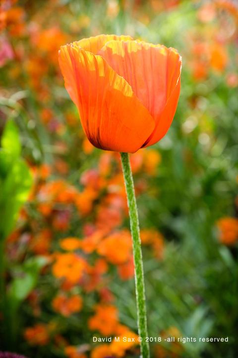 6.7.18 - Orange Rising....