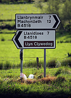 Signs to Llanbrynmair, Machynlleth, Llyn Clywedog lake and Llanidloes on the B4518 at the village of Staylittle (Penffordd-Las in welsh)