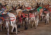 Spanien, Andalusien, Provinz Malaga, Costa del Sol, Mijas: weisses Dorf, Esel | Spain, Andalusia, Province Malaga, Costa del Sol, Mijas: pueblo blanco, donkey