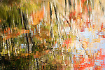 abstract, reflection, autumn, fall, river, Maine