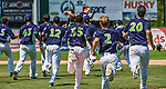 8 July 2014: Vermont Lake Monsters outfielder Scott Masik is congratulated by teammates after driving in the game winning, walk-off RBI double, driving in Ben McQuown and Joe Bennie, in a daytime matchup against the Lowell Spinners at Centennial Field in Burlington, Vermont. The Lake Monsters rallied with two runs in the 9th to defeat the Spinners 5-4 in NY Penn League action. Mandatory Credit: Ed Wolfstein Photo *** RAW Image File Available ****