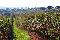 alicante bouschet vines irrigation tubes herdade de sao miguel alentejo portugal