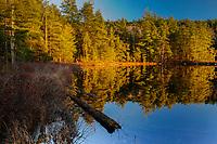 Whortleberry Pond, Pharoah Lake Wilderness Area, Adirondack Forest Preserve, New York