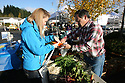 The Poulsbo Farmers Market is in its final weeks in downtown Poulsbo. The popular market extended its season into mid-december. Poulsbo's Kristina Pittman gathers fresh produce for her family Saturday from Paul Gregory of Silverdale's Gregory Farms. Brad Camp | For the Kitsap Sun