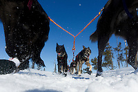 John Baker dogs trot down the just a mile from the ghost-town checkpoint of Iditarod during the 2011 Iditarod race.