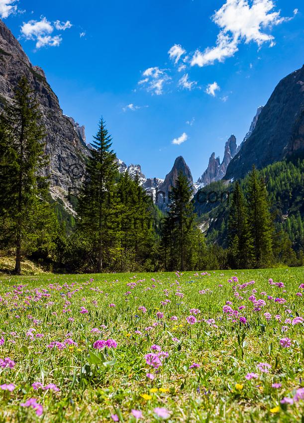 Italy, South Tyrol (Trentino - Alto Adige), near Sexten, district Moos: the picturesque Fischleintal (Val Fiscalina) at Drei Zinnen Nature Park (Parco Naturale Tre Cime), side valley of Sexten Valley (Valle di Sesto) - flower meadow at valley end and Sexten Dolomites (Dolomiti di Sesto) La meridiana di Sesto with summit Zwoelferkofel (Cima Dodici)   Italien, Suedtirol, bei Sexten, Ortsteil Moos: das malerische Fischleintal im Naturpark Drei Zinnen - ein Nebental des Sextentals - Blumenwiese am Talschluss vor der Sextener Sonnenuhr mit dem Zwoelferkofel