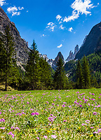 Italy, South Tyrol (Trentino - Alto Adige), near Sexten, district Moos: the picturesque Fischleintal (Val Fiscalina) at Drei Zinnen Nature Park (Parco Naturale Tre Cime), side valley of Sexten Valley (Valle di Sesto) - flower meadow at valley end and Sexten Dolomites (Dolomiti di Sesto) La meridiana di Sesto with summit Zwoelferkofel (Cima Dodici) | Italien, Suedtirol, bei Sexten, Ortsteil Moos: das malerische Fischleintal im Naturpark Drei Zinnen - ein Nebental des Sextentals - Blumenwiese am Talschluss vor der Sextener Sonnenuhr mit dem Zwoelferkofel