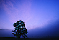 A tree is silhouetted at sunrise at Swan Lake Flats in Yellowstone National Park, Wyoming