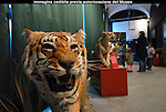 Museo Regionale di Scienze Naturali. The Turin Museum of Natural History