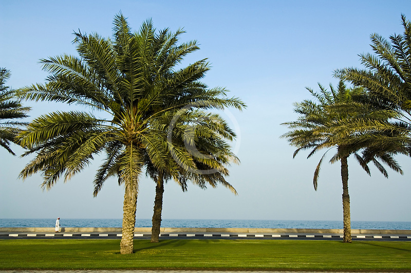 United Arab Emirates, Fujairah, Palm trees along waterfront
