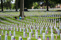 65095-01814 Flags on Memorial Day at Jefferson Barracks National Cemetery, St Louis, MO