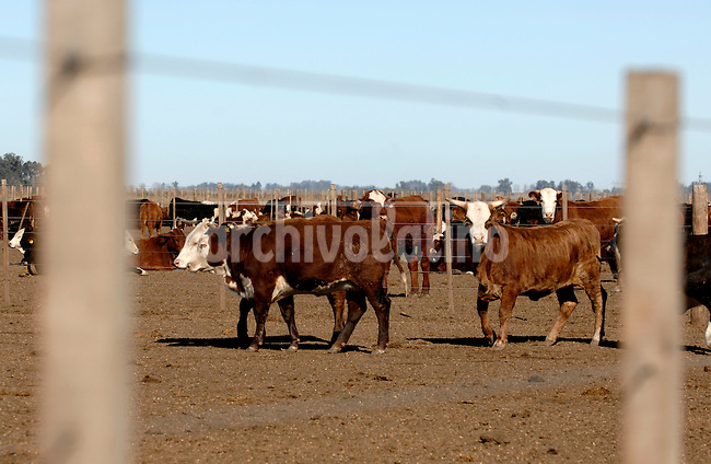 Cattle stand in a corral on a farm near Pergamino, Argentina... Farmers are not selling grains during the last 80 days and limited the shipments of cattle for the market in protest after the government decided to rise export taxes...