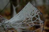 Berijpt spinnenweb