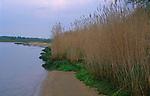 AF5GMD Reeds beds River Deben near Ramsholt Suffolk England