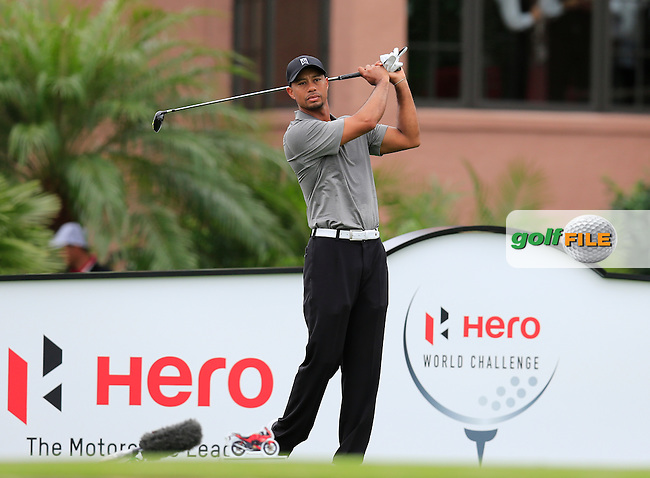 Tiger Woods (USA) during round 2 of the Hero World Challenge, Isleworth Golf &amp; Country Club, Windermere, Orlando Florida, USA. 05/12/2014<br /> Picture Fran Caffrey, www.golffile.ie