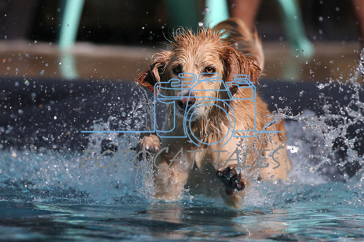 Sunny enjoys the 9th annual Pooch Plunge at the Carson City Aquatics Center in Carson City, Nev., on Saturday, Sept. 23, 2017. The event is a fundraiser for Carson Animal Services Initiative which supports the Nevada Humane Society in Carson City. <br />