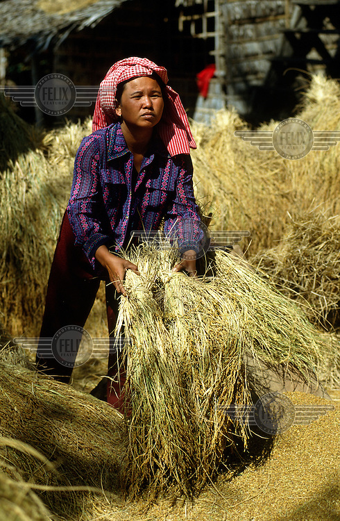 Peasant woman threshing the rice harvest.