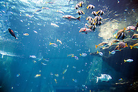 """The Sea Of Tropical Fish"" display at the Okinawa Churaumi Aquarium at Ocean Expo Park."