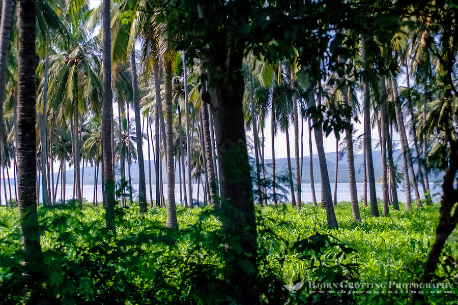 Java, Banyuwangi. Palm forest north of Banyuwangi, Bali can be seen among the trees.