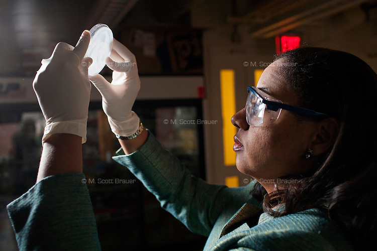 Kristala Jones Prather is an Associate Professor of Chemical Engineering and director of the Prather Research Group at MIT in Cambridge, Massachusetts, USA. The lab investigates the design and assembly of microorganisms and microbial systems. Prather is seen here looking at Petri dishes filled with yeast cells. The yeast cells are part of Prather Research Group post-docu Shawn Finney-Manchester's work trying to increase productivity of yeast cultures as they look at glucaric acid in the cells.