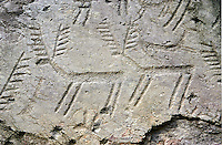 Prehistoric  petroglyphs, rock carvings, of deer in an ancient snctuary carved by the the ancient Camuni people in the Copper Age around the 3rd milleneum BC  , Massi dei Cemmo Archaeological Site, Capo di Ponti, Lombardy Italy