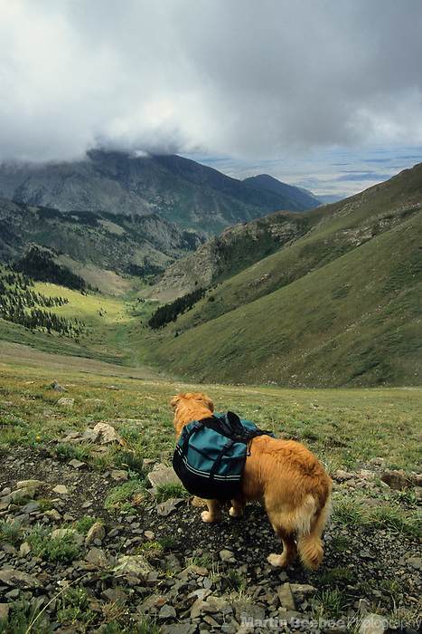 Dog peering into alpine valley, Sangre de Cristo Wilderness, San Isabel National Forest, Colorado