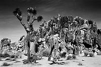 Joshua Tree NP, Film