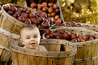 Baby girl in a apple basket at the Twenty Acre Farm in Grand Isle, Vermont.