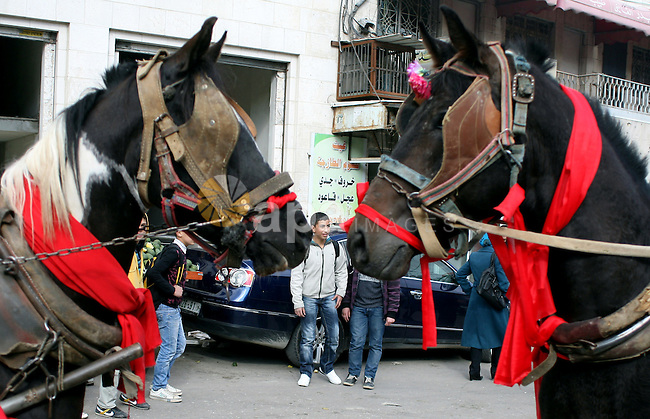 Palestinian men ride a horse-drawn cart during Valentine's Day is celebrated on February 14 by many people throughout the world. In the West, it is the traditional day on which lovers express their love for each other by sending Valentine's cards and give away flowers on February 14,2011,in the West Bank city of Hebron. Photo by Najeh Hashlamoun