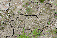 Dry, cracked, parched, drought stressed soil ground dirt in garden, weedy,