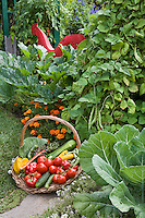 Bountiful harvest basket of organic vegetables in Rosalind Creasy small space edible landscaping garden border