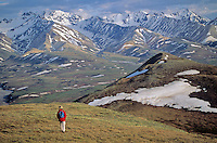 Hiker on tundra above Polychrome Pass area of Denali National Park, Alaska, AGPix_0161.