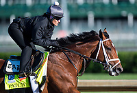 LOUISVILLE, KENTUCKY - MAY 02: Patch, owned by Calumet Farm and trained by Todd Pletcher, exercises in preparation for the Kentucky Derby at Churchill Downs on May 2, 2017 in Louisville, Kentucky. (Photo by Scott Serio/Eclipse Sportswire/Getty Images)
