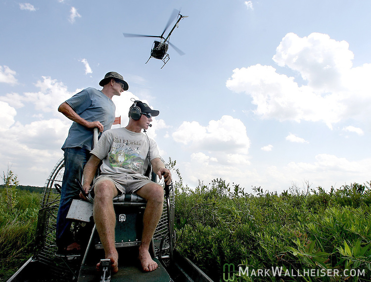 "With the helicopter guiding them by radio from overhead, Wayne ""Hoho"" Brooks, foreground, and Carl Nettles head into a swampy thicket to collect alligator eggs from a nest at Lake Miccosukee 25 miles east of Tallahassee, Florida July 19, 2007."