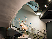 Rentier, Helms-Museum = Arch&auml;ologisches Museum Hamburg, Deutschland, Europa<br /> Reindeer, Helms-Museum = Archaeological  Museum Hamburg, Germany Europe