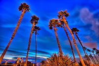 HDR Photo Of Palm Trees In The Sky